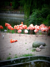 Copenhagen Zoo - Quietly catering to tourists whilst remaining thoroughly Danish.
