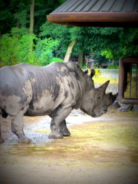Simply impressive. The size and strength of the rhino needs to be seen to be believed.